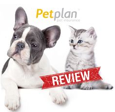 17 best pet insurance reviews images pet insurance reviews, dogpet insurance comparison chart like your health insurance, pet insurance comes in all shapes and