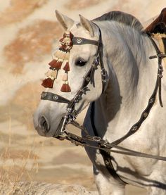 This horse watches on, as more arrive for the Albox fiesta, Almeria, Spain.