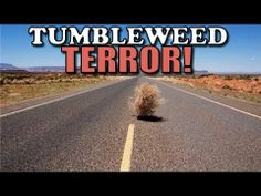 Tumbleweed Terror (2014) - YouTube  .. (( I love this guy's talking kitty vidoe's, and this is his girlfriend coming face to face with her tumble weed phobia! DUN DUN DUN! Hahaha ))