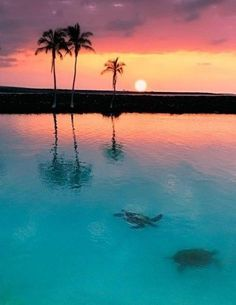 Sea turtles at sunset, Tobago Cays, The Grenadines