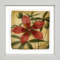 @Overstock - Artist: Unknown  Title: Vintage Botanical #22  Product type: Framed and matted Giclee fine art print http://www.overstock.com/Main-Street-Revolution/Studio-Works-Modern-Vintage-Botanical-22-Framed-Print/7621655/product.html?CID=214117 $54.99