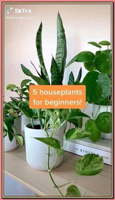 (paid link) House plants safe For Cats Children #catsafehouseplants