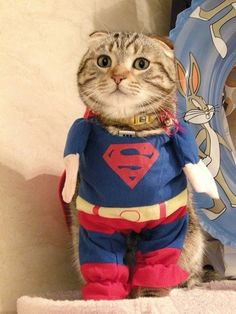 Super hero. My cat would kill me, but this makes me want to dress him up.