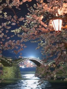 Cherry Blossoms and Kintai  Bridge, lwakuni, Yamaguchi, Japan