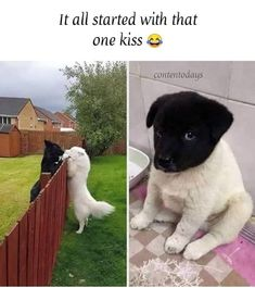 Animals on - Cat videos, Dog pics and other cute animals Funny Animal Jokes, Funny Dog Memes, Really Funny Memes, Cute Funny Animals, Funny Relatable Memes, Funny Cute, Funny Dogs, Hilarious, Memes Estúpidos