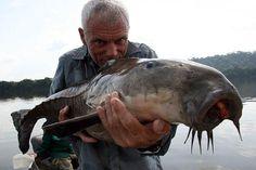 El Culu Culu es un pez que se encuentra en el río Amazonas que puede llegar a medir hasta casi un metro y pesar hasta 18kg.