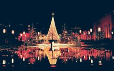 Christmas tree, lights