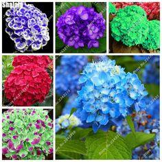 5 pcs Hydrangea Macrophylla Flower Seeds Balcony & Courtyard Terrace Decorative Landscaping DIY Gardening Rare Flower Seeds