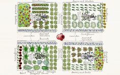 Herbs, flowers and vegetables in a beguiling plan.  No scale.