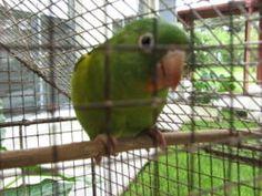how to hand train a parakeet