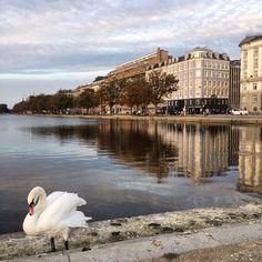 👣👀 O correspondente Bruno @bandrietta do Pé na Estrada e Olho no Clique está em Copenhagen na Dinamarca nos enviando fotos lindas!