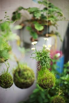 c@sas de pelicula: Jardines Kokedama