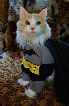 Another Batman Cat Halloween Costume Pet Halloween Costumes, Pet Costumes, Dog Halloween, Halloween Foods, Kittens In Costumes, Animal Costumes, I Love Cats, Crazy Cats, Cute Cats