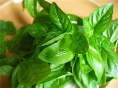 Manjericão  Folhas de manjericão também ajudam no alívio de azia, bem como combater a náusea e gás. Mastigar 2 a 3 folhas de manjericão minimiza o ácido do estômago.