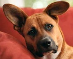 Dog TV: Programming for Your Pup