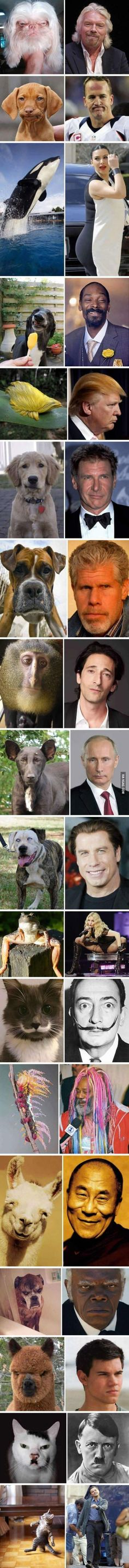 Celebs and their animal lookalikes Funny Animal Memes, Funny Animal Pictures, Best Funny Pictures, Funny Jokes, Funny Animals, Cute Animals, Hilarious, Troll Meme, Sports Humor