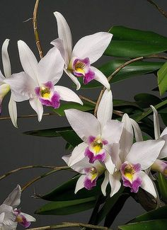 Beautiful Orchids! by Charles Boco