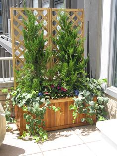 Beautifully crafted containers with lattices for climbing plants are a great way to transform your urban rooftop or deck in to a great green space #nyc #urbangarden