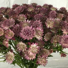 All Details You Need to Know About Home Decoration - Modern Flowers Uk, Spring Flowers, Astrantia Flower, Floral Wedding, Wedding Flowers, Sogetsu Ikebana, Pink Uk, February Wedding, Planting Flowers