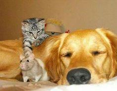 Hund,Katze, Maus