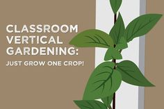 It can be tempting to fill your classroom garden tower with a variety of plants but planting only one crop will make life easier for you.