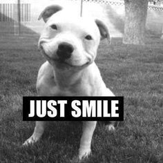 Dogs can teach you amazing things! #smile #live #life #love #dogs #pitbulls #animals #pets #quotes