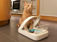 Microchip Pet Feeder Solves Problems in Multi-Pet Households