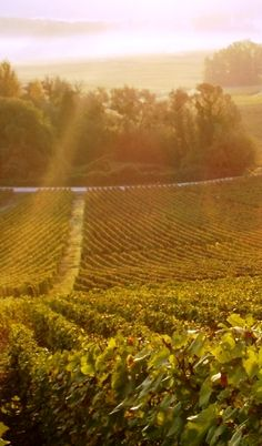 The beautiful vineyards of Champagne
