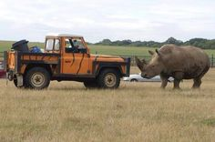 #LandRover #Defender - Facing off against a rhino! #OffRoad #Adventure #Challenge #Scary