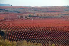 La Rioja, site of one API Spain excursion...