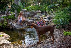 Create a Pebble Beach Backyard Stream, Backyard Water Feature, Ponds Backyard, Backyard Ideas, Garden Ponds, Pond Ideas, Outdoor Ideas, Garden Ideas, Dog Pond