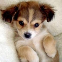 this is the cutest puppy alive!