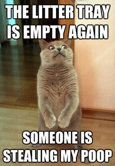 The Litter Tray Is Empty Again Cat Meme - Cat Planet | Cat Planet #whydocatmeow - Catsincare.com!
