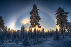 Holy Halo by JrnAllanPedersen #nature