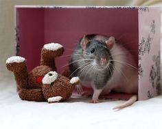 des rats et des ours en peluche 21 Des rats et des ours en peluche teddy bear rat photo peluche ours Jessica Florence image Ellen van De...