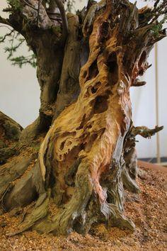 will baddeley bonsai - Google Search