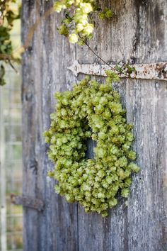 green wreath: looks like hops