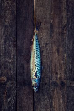 [CasaGiardino] ♛ A fresh Mackerel hanging against a rustic wooden background. Food Photography by Louis Neville. Rustic Photography, Still Life Photography, Photography Composition, Rustic Style, Rustic Decor, Rustic Cafe, Rustic Backdrop, Rustic Cottage, Rustic Modern