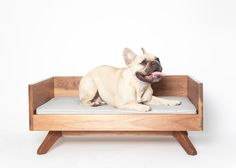 Modern Wood Dog Bed  The Joey High Back Bed door EATSLEEPFETCH, $529.00