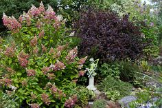 Thinking of planting a Pinky Winky Hydrangea with Purple Smoke Bush for nice contrast...