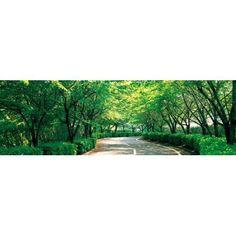 Tree lined road Osaka Shijonawate Japan Canvas Art - Panoramic Images (36 x 12)