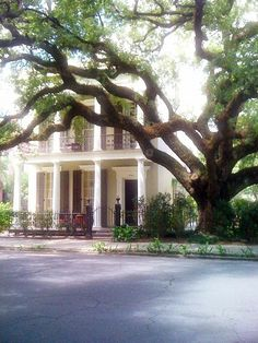 lower garden district, new orleans. Ostentatious houses and beautiful gardens.