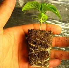 Huerto Urbano – Errores en el Cultivo II: El Trasplante. | Ecoterrazas