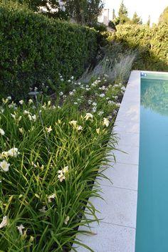 Landscape Architecture, Landscape Design, Garden Design, Pool Fence, Gandhi, Home Deco, Garden Landscaping, Ideas Para, Sidewalk