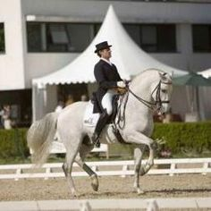 Pure Spanish Horse in the Olympics - Fuego XII in the Hong Kong Olympics