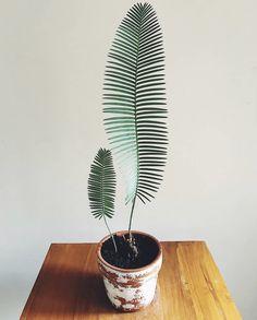 Real Plants, Potted Plants, Cactus Plants, Garden Plants, Indoor Plants, Foliage Plants, Cactus Art, Indoor Cactus, Cactus Decor