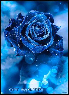de - your free picture community, Black Flowers Wallpaper, Flowers Black Background, Beautiful Flowers Wallpapers, Beautiful Rose Flowers, Flower Phone Wallpaper, Rose Wallpaper, Exotic Flowers, Amazing Flowers, Blue Flowers