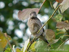 Bird in nature on fresh air
