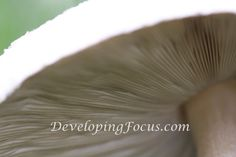 Mushroom Macro Photo Art Photograhy Card or Print Download, Mushroom Gill Closeup Photo Art Decor Download