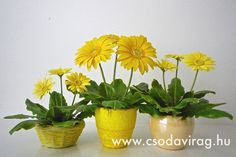 Gerbera, Planter Pots, Clay, Facebook, Flowers, Clays, Royal Icing Flowers, Flower, Florals